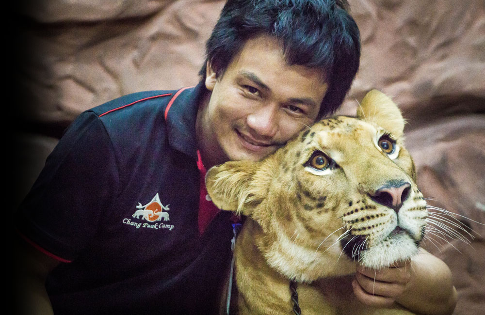 liger2