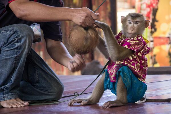 monkey show-600