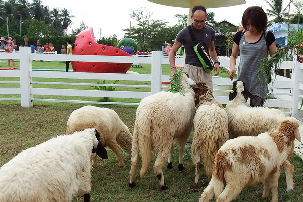 sheep 600