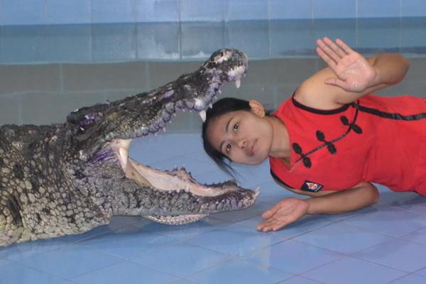 croc4 600 400