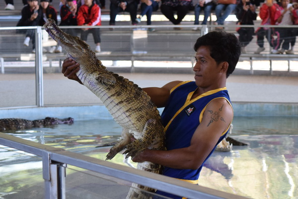 show croc 600 400