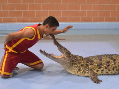 croc1-1000
