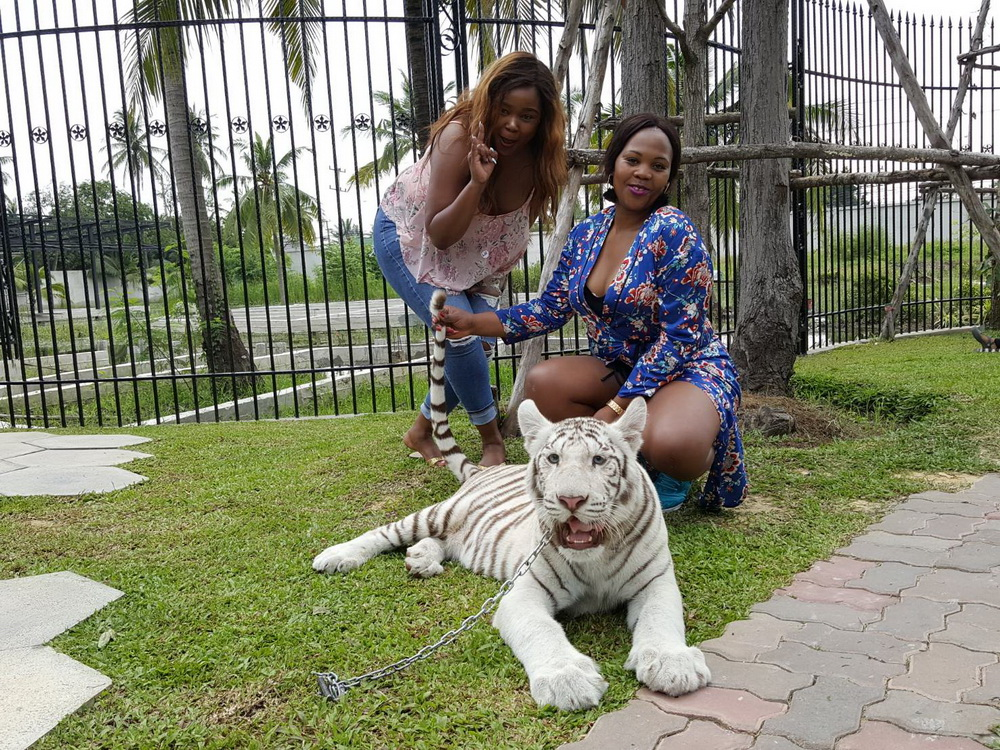 tiger park gallery_5